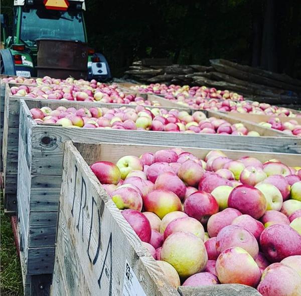 pommes-rentrée-raisonetgourmandise.com
