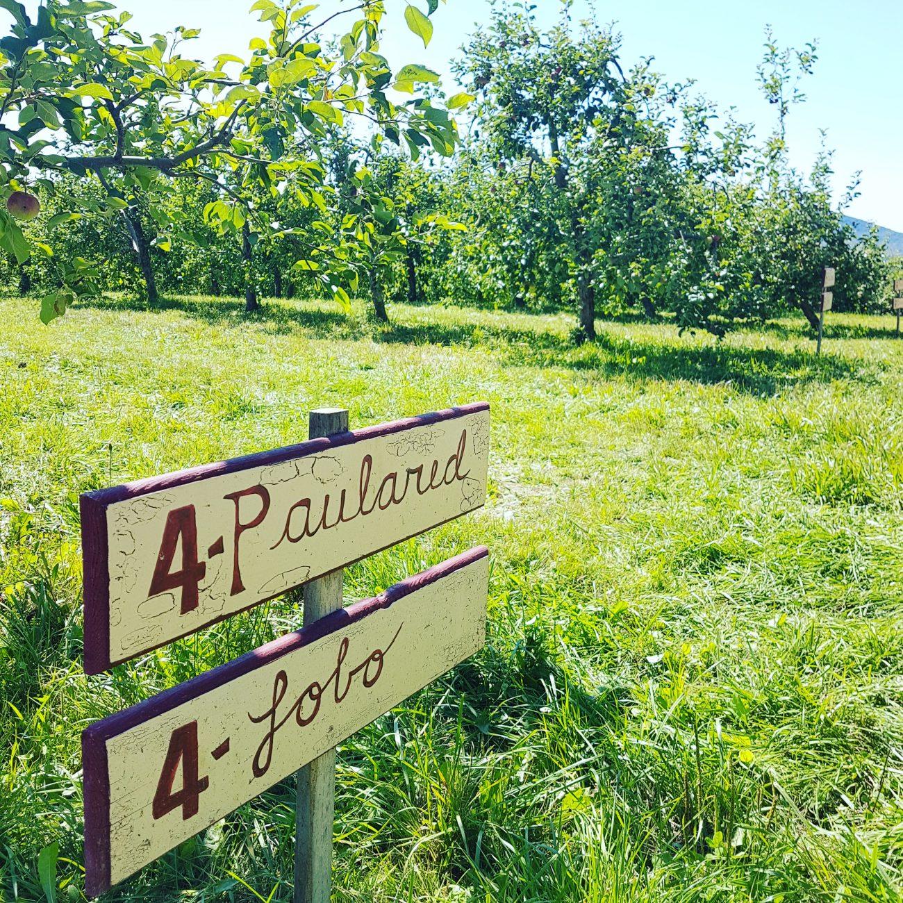 verger-pommes-autocueillette-quebec-raisonetgourmandise (1)